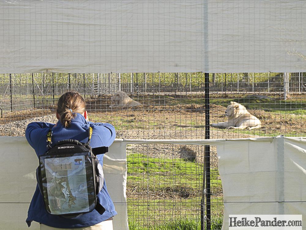 White_Lion_Stellenbosch_0804