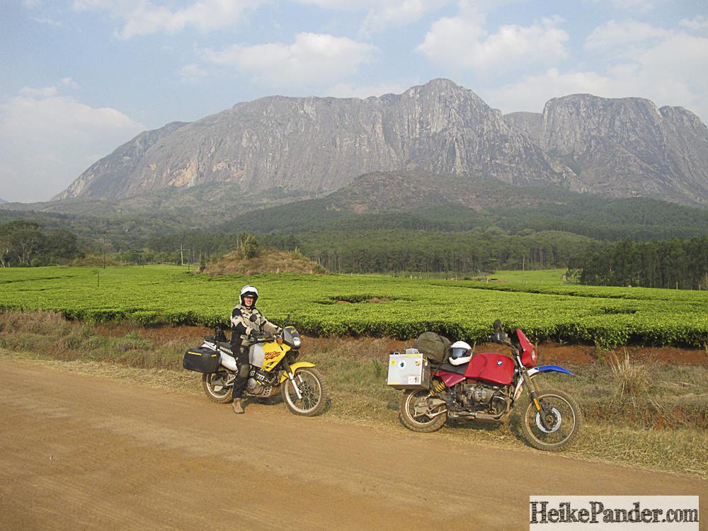 Teeplantagen, Mulanje, Malawi