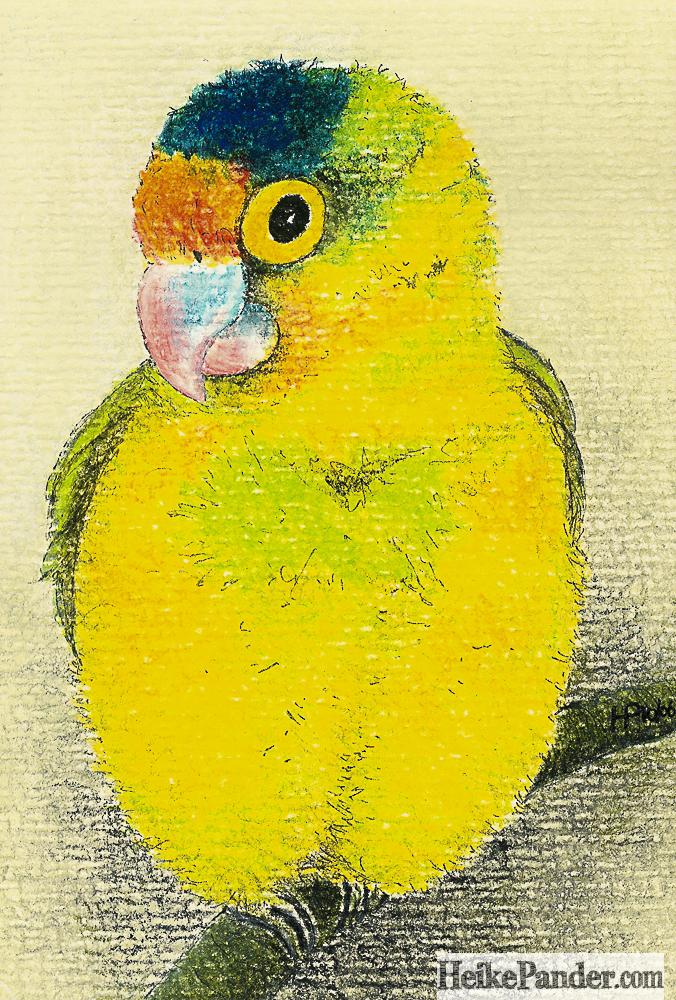 Lovebird, Pastellkreiden, Heike Pander