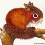 Eichhörnchen, Pastellkreiden, Heike Pander