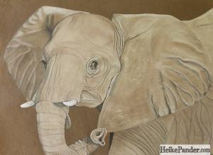 Elefant, Pastellkreide, Heike Pander