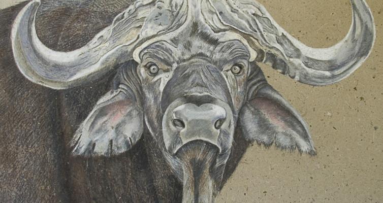 Büffel, Pastellkreide, Heike Pander