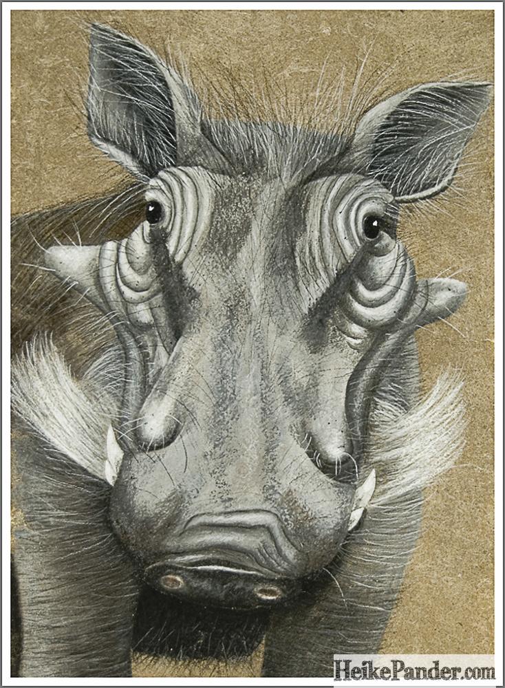 Warzenschwein, Pastellkreide, Heike Pander