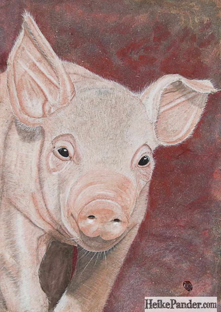 Hausschwein, Pastellkreide, Heike Pander