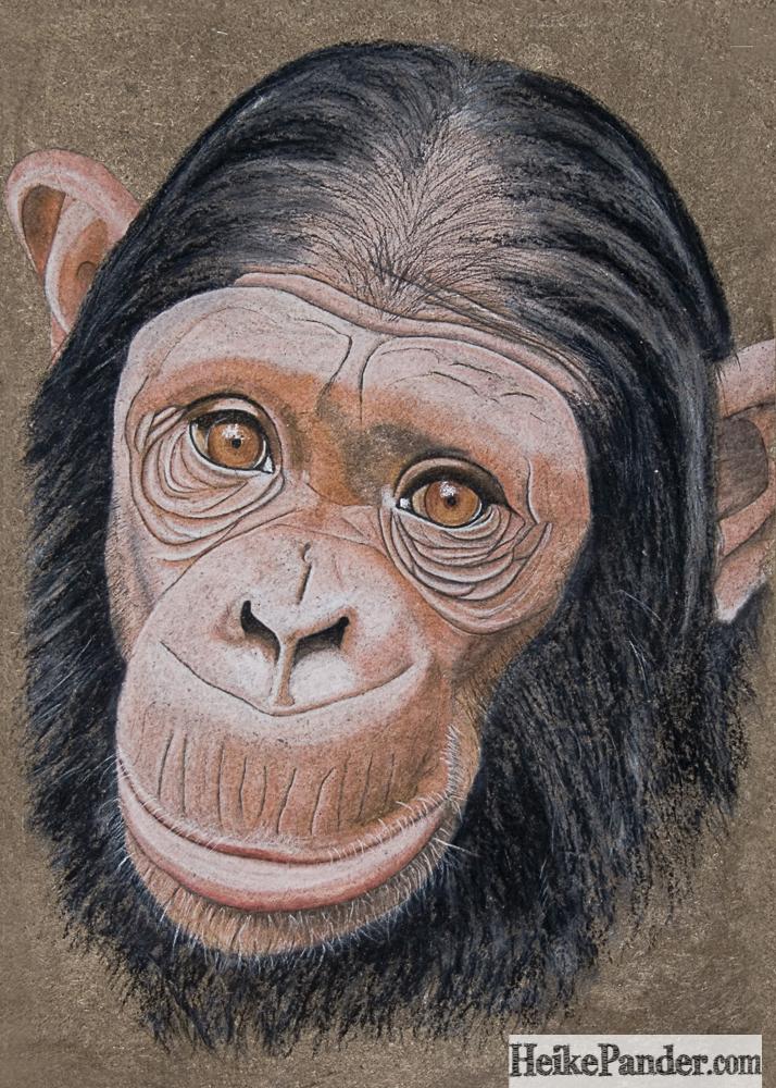 Schimpansin, Pastellkreide, Heike Pander