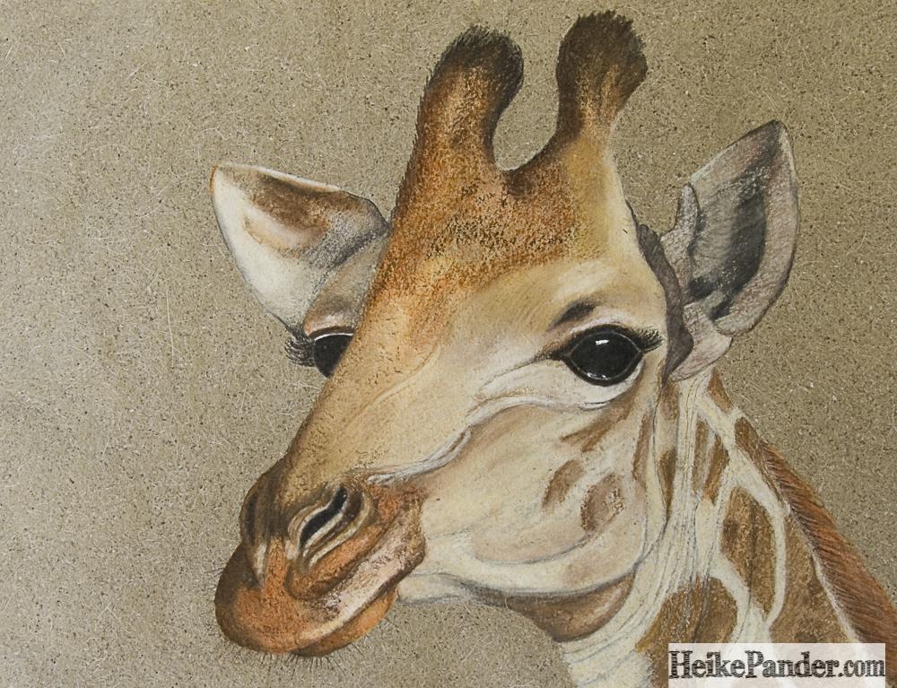 Giraffe, Pastellkreide, Heike Pander