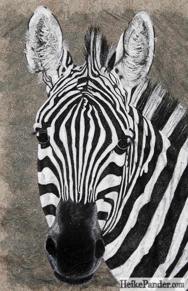 Zebra, Pastellkreide, Heike Pander