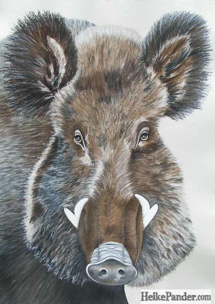 Wildschwein, Pastellkreide, Heike Pander