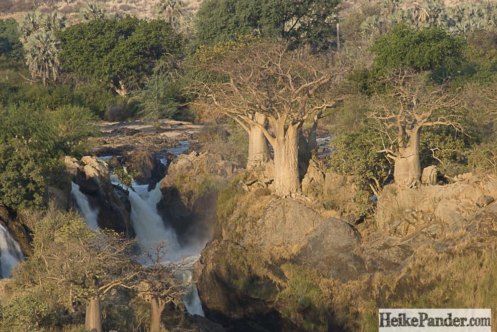 Baobabs, Epupa Falls, Namibia