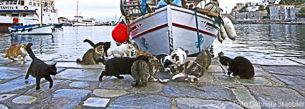 Katzen am Fischerboot, Hydra, Gabriela Staebler
