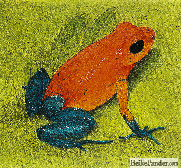 Frosch, orange, Pastellkreiden, Heike Pander