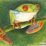 Rotaugenfrosch, Pastellkreide, Heike Pander