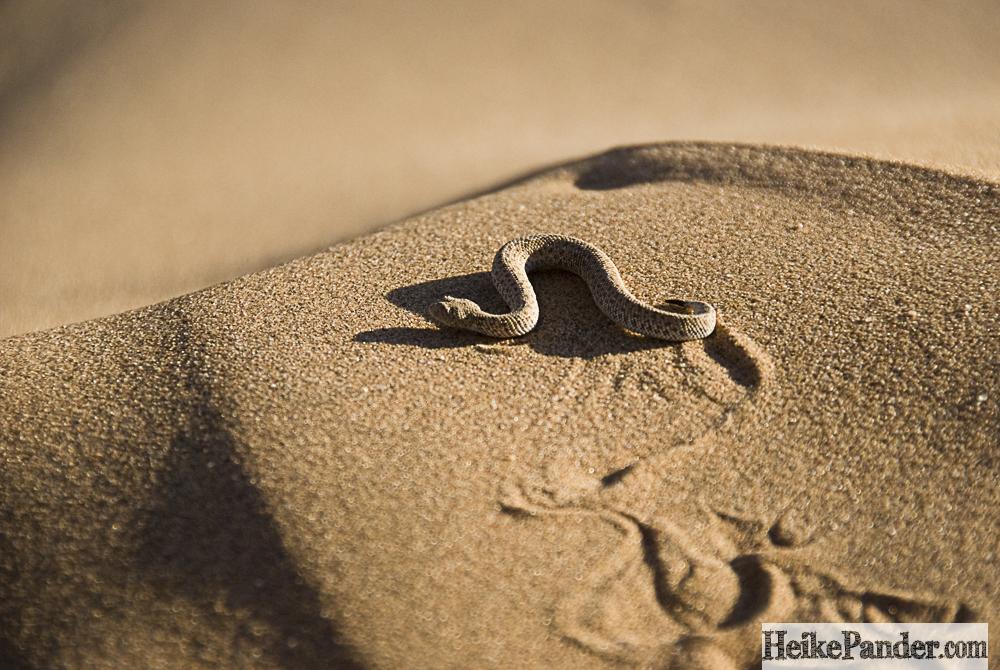 Schlange im Sand