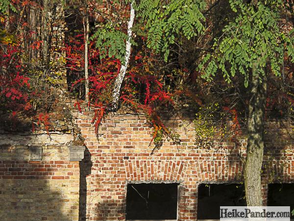 Waldansicht auf Ruine, Beelitz