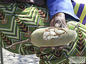 Cracked Baobab Fruit
