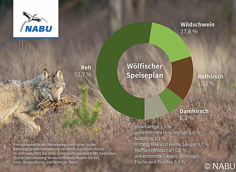 Nahrungszusammensetzung von Wölfen, Deutschland