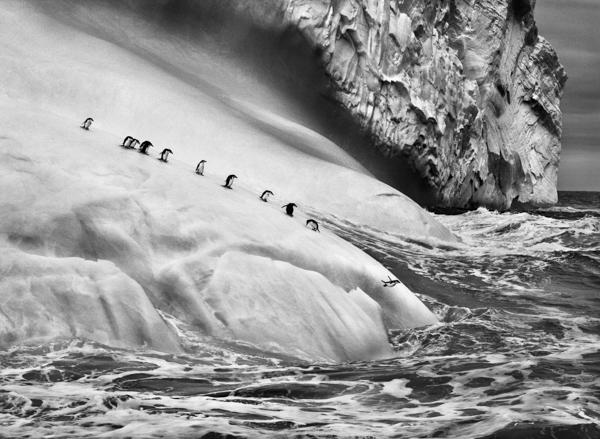 "Pinguine, South Sandwich Islands, 2009, Sebastiao Salgado, Amazonas Images, Fotografie in der Ausstellung ""Genesis"", C/O Galerie Berlin"