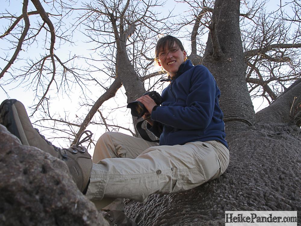 Baobab, Namibia