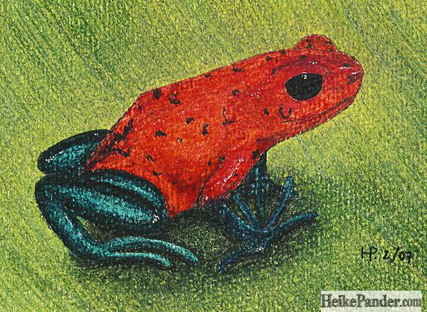 Rotblauer Frosch, Pastellkreiden, Heike Pander