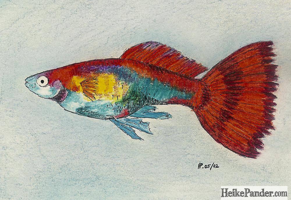 Fisch, Pastellkreiden, Heike Pander