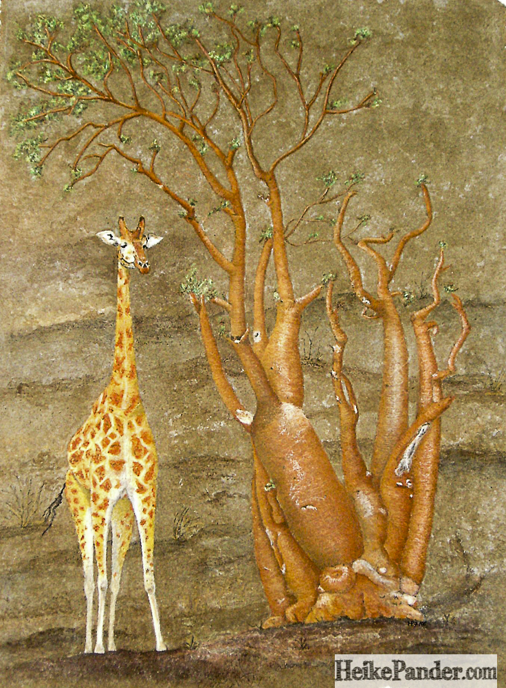 Giraffe, Moringa, Pastellkreiden, Heike Pander