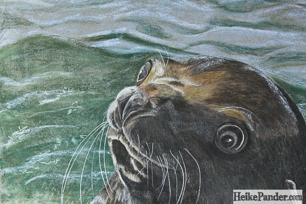 Seebär, Pastellkreide, Heike Pander