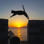 Katze im Sonnenuntergang, Hydra, Gabriela Staebler