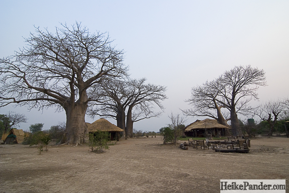 Bushman's Baobab, Malawi