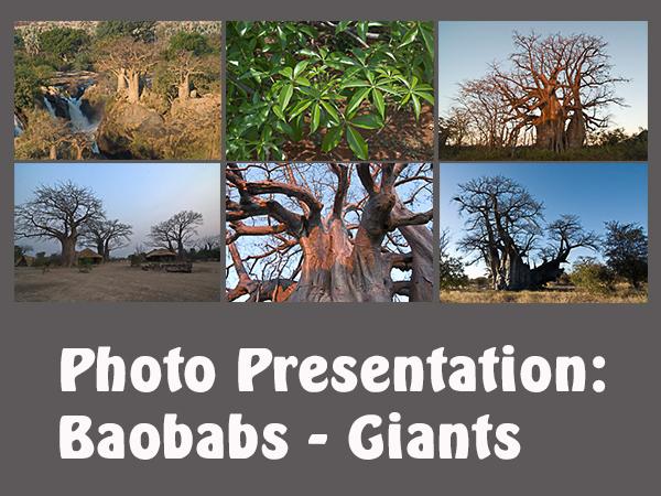 Baobabs_Giganten_EN_130316