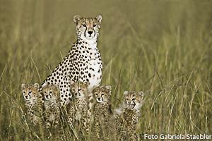 Gepardin, c/o Gabriela Staebler