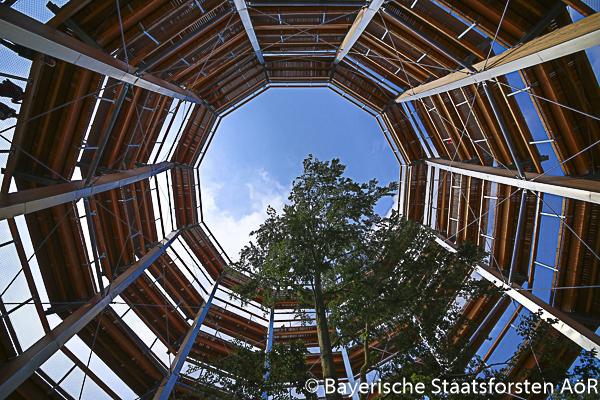 Baumkronenpfad Steigerwald, Ebrach