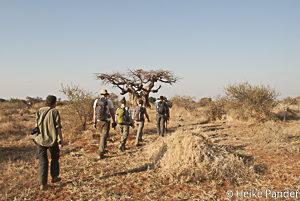 Walking Botswana