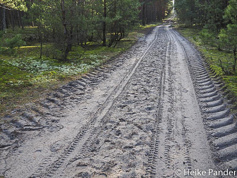 Forstweg mit Wofsfährte, Hoher Fläming, Brandenburg