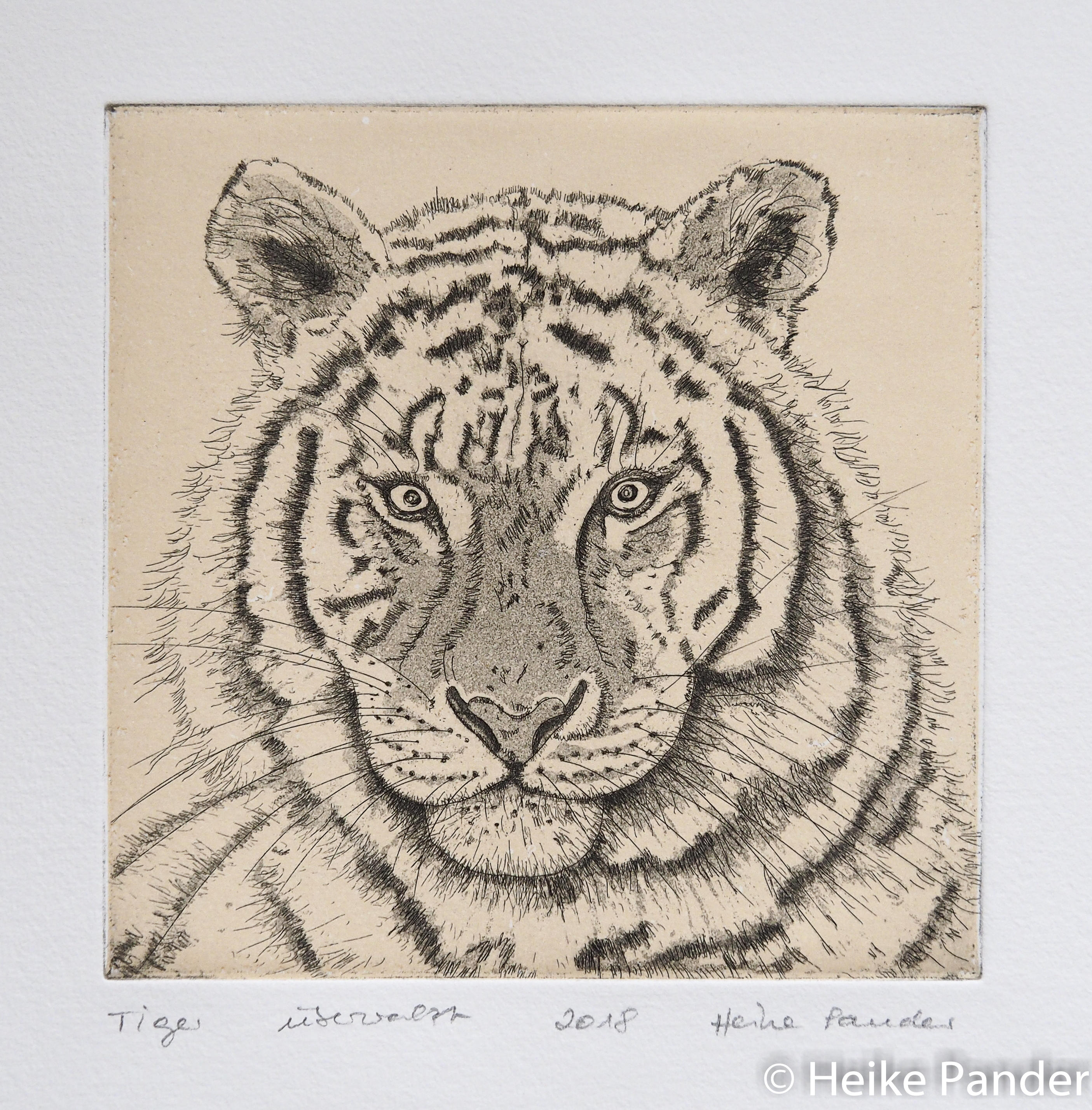 Tiger, Aquatinta, Strichätzung, Heike Pander