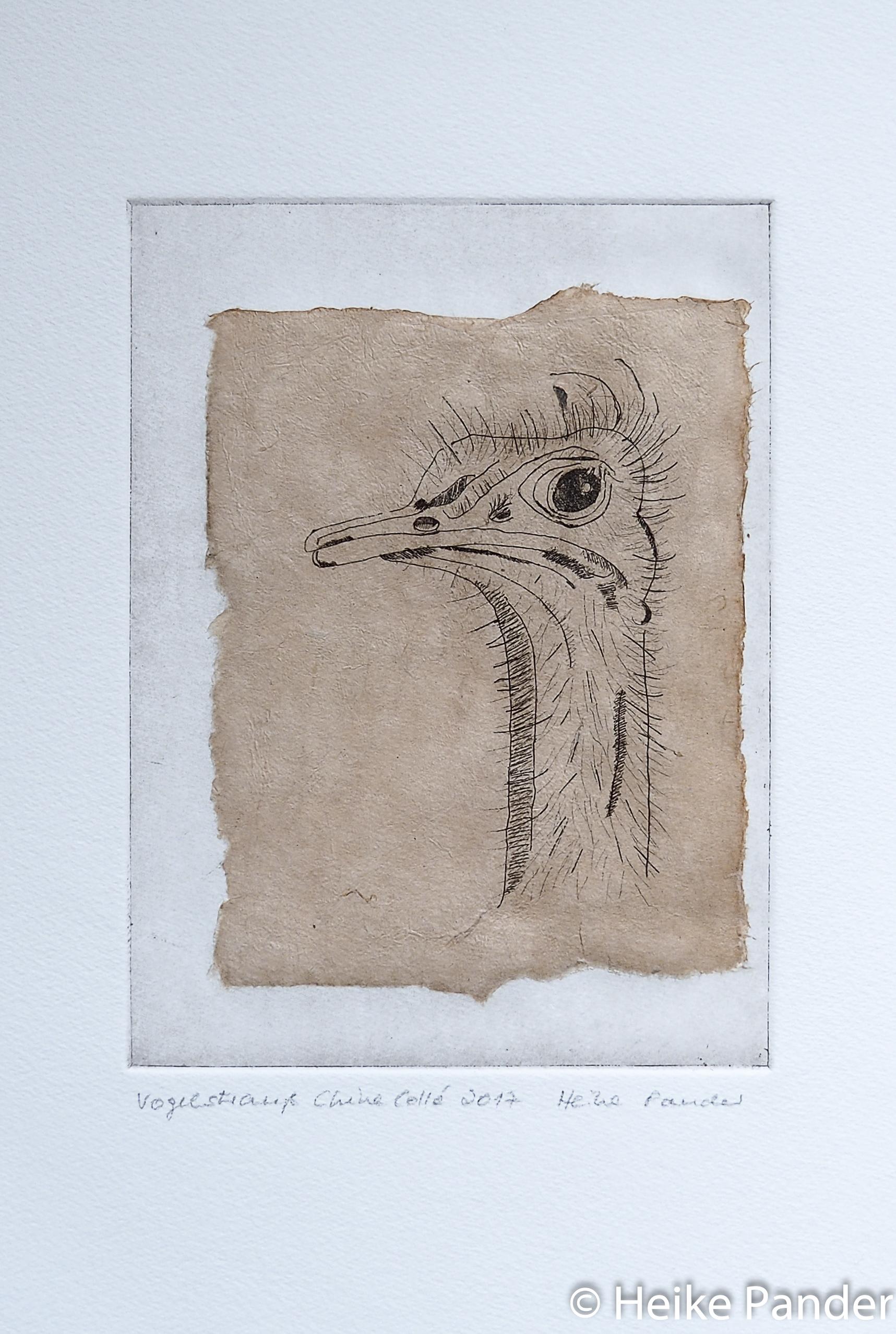 Vogelstrauß, Strichätzung und Chine Collé, Heike Pander