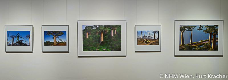 """Baobab Fotografien von Pascal Maître in der Ausstellung """"Baobab – der Zauberbaum"""" im NHM, Wien"""