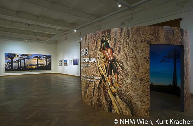 """Baobab-Konstruktion in der Ausstellung """"Baobab – der Zauberbaum"""" im NHM, Wien"""