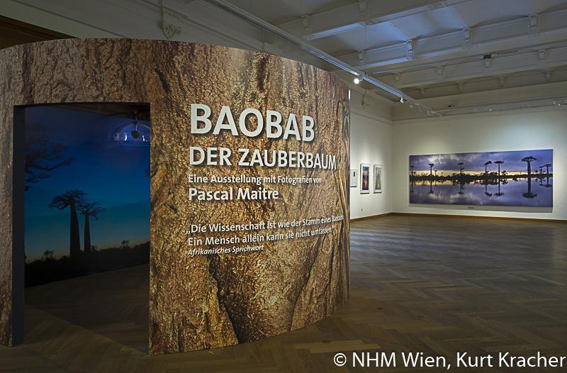 """Blick in die Ausstellung """"Baobab – der Zauberbaum"""" mit Fotografien von Pascal Maître im NHM, Wien"""