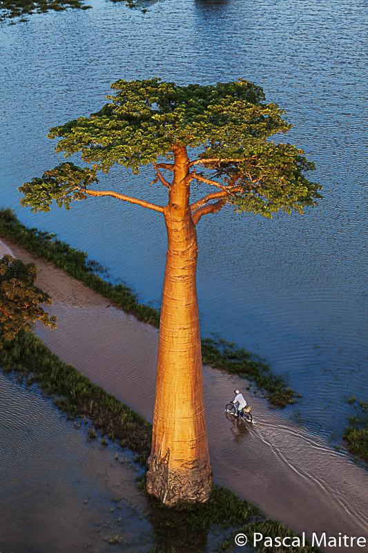 """Monrondava """"Allee der Baobabs"""" in der Ausstellung """"Baobab – der Zauberbaum"""" im NHM, Wien, Pascal Maître"""