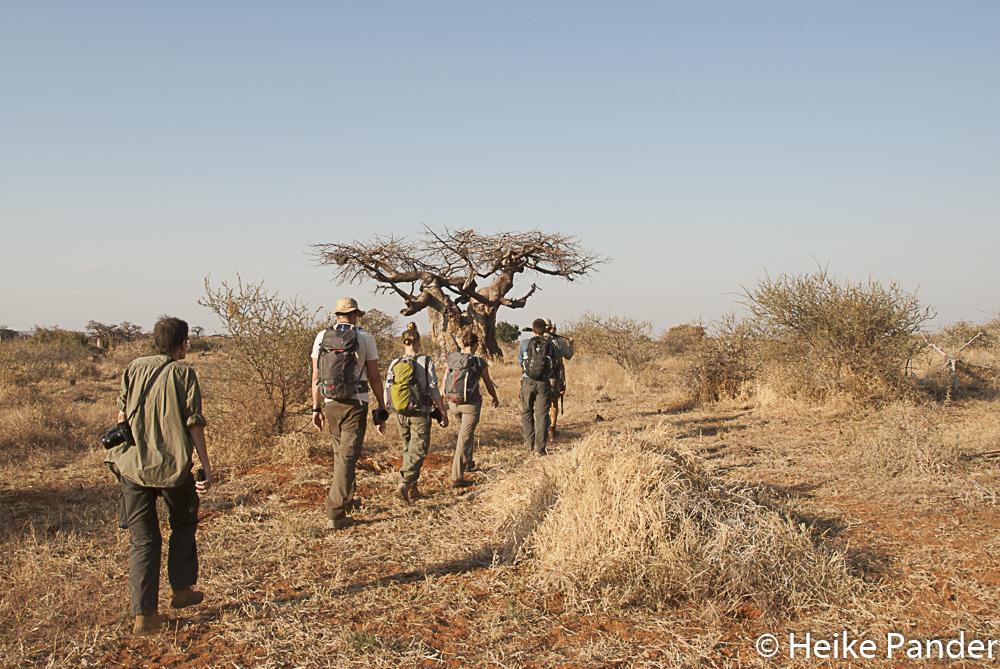 [:de Wildniswanderung, Mashatu, Botswana] Hiking in the Wilderness, Mashatu, Botswana