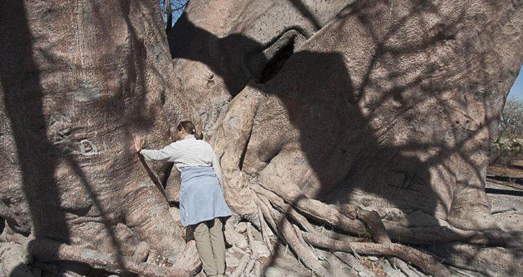 Chapmans Baobabs, Heike Pander