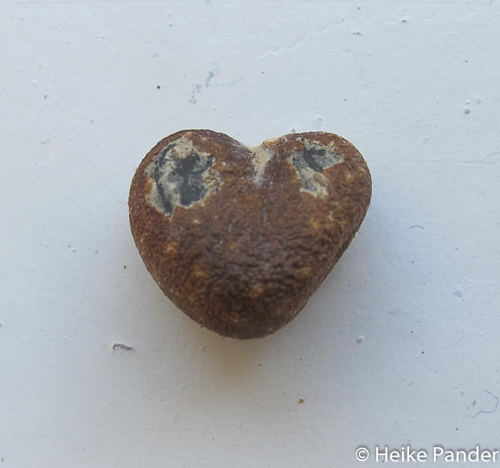 Baobab Samen in Herzform, Heike Pander