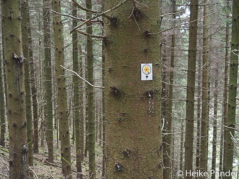 Wegweiser, Narzissenweg, Höfen, Eifel