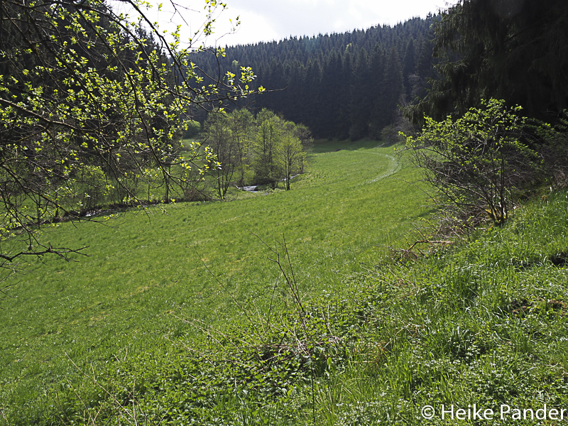 Eifelwiesen, Nationalpark Eifel, in der Nähe von Höfen