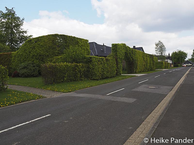 Buchenhecken, Höfen, Eifel