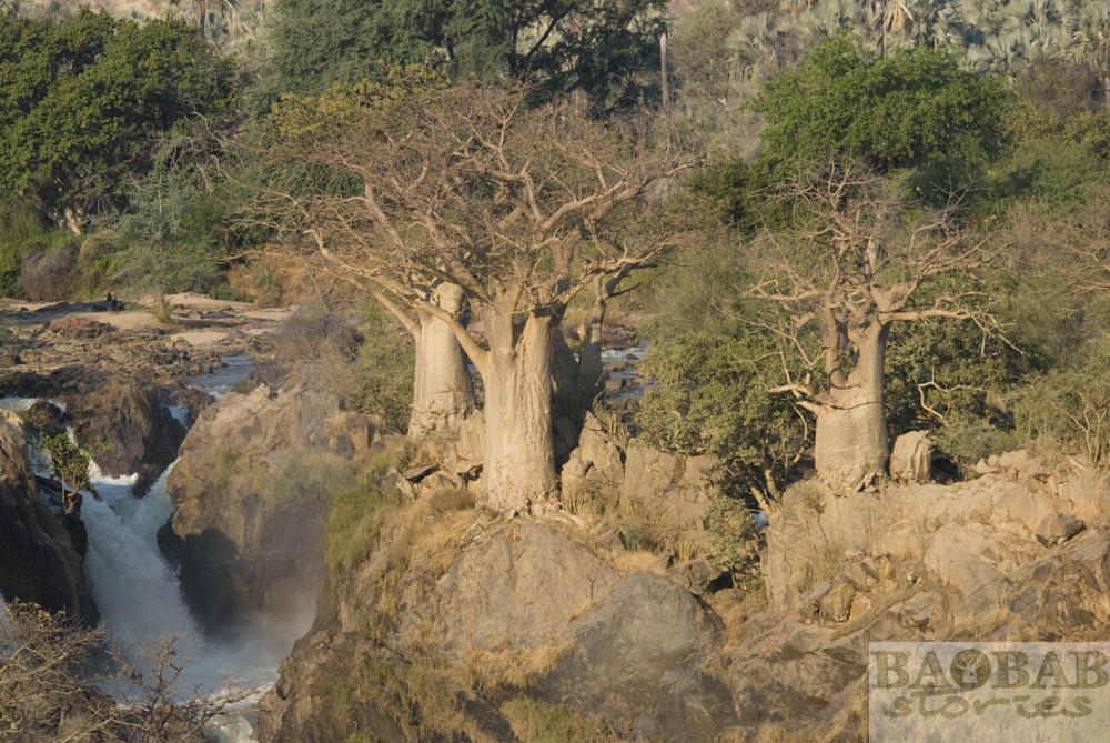 Baobabs, Epupa Falls, Heike Pander