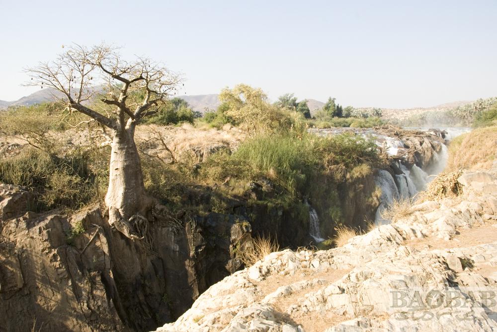 Baobab am Abgrund, Epupa Falls, Heike Pander