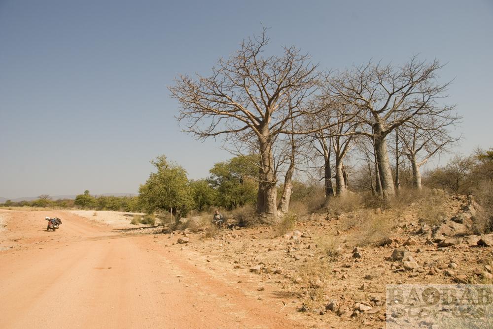 Baobabs, Strasse Epupa Falls, Heike Pander
