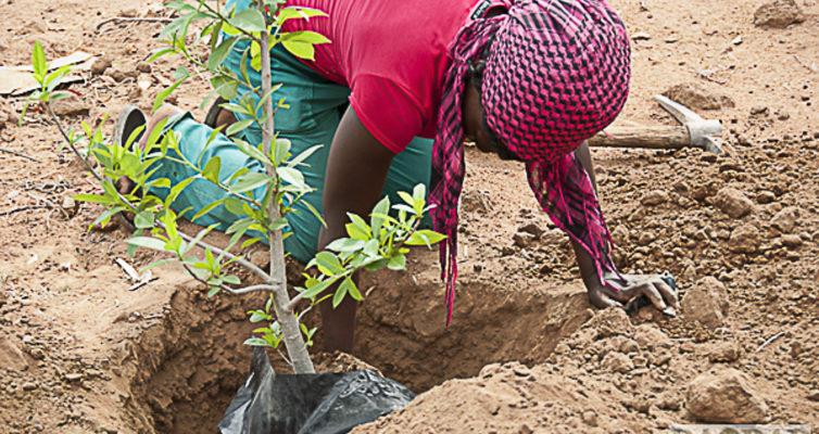 Baobab Hüterin beim Aussetzen eines Baobab, Südafrika, Heike Pander