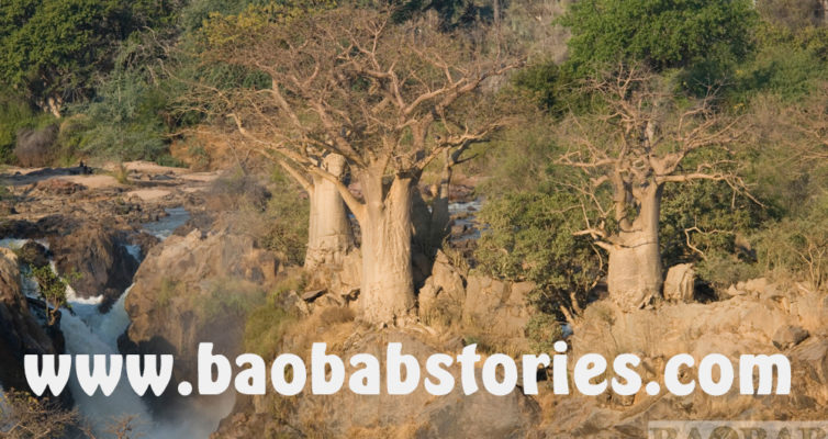 Baobab Webseite, Heike Pander